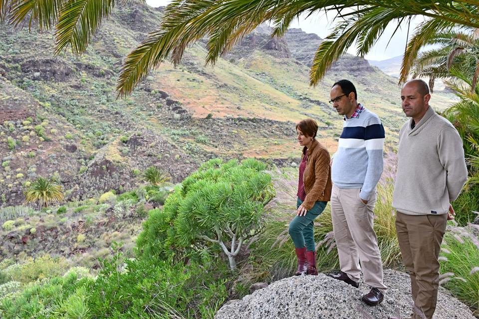 Mogán kicks off Gran Canaria project for reforestation of ravines through the Green Forest Fund