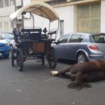 A Tartana horse dies on the streets of Las Palmas
