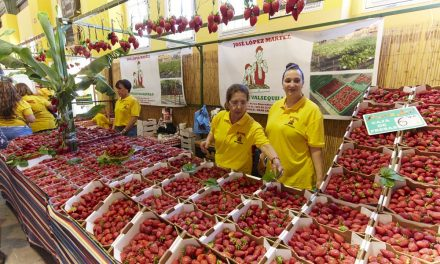 Events: Strawberry Fair Valsequillo de Gran Canaria