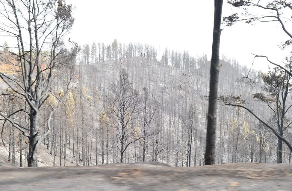 The Gran Canaria forest fire suspected to have originated from a power line in contact with a tree
