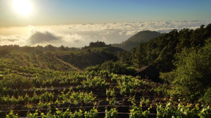 Canarian wines triumph in Italy