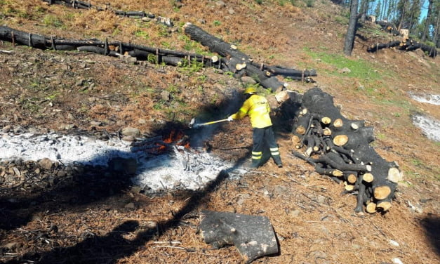 Pruning and burning at the peaks and inland areas of Gran Canaria