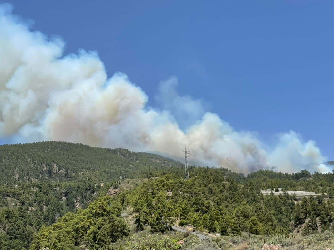 Tenerife Forest Fire declared a Level 2 emergency at the request of the Cabildo de Tenerife