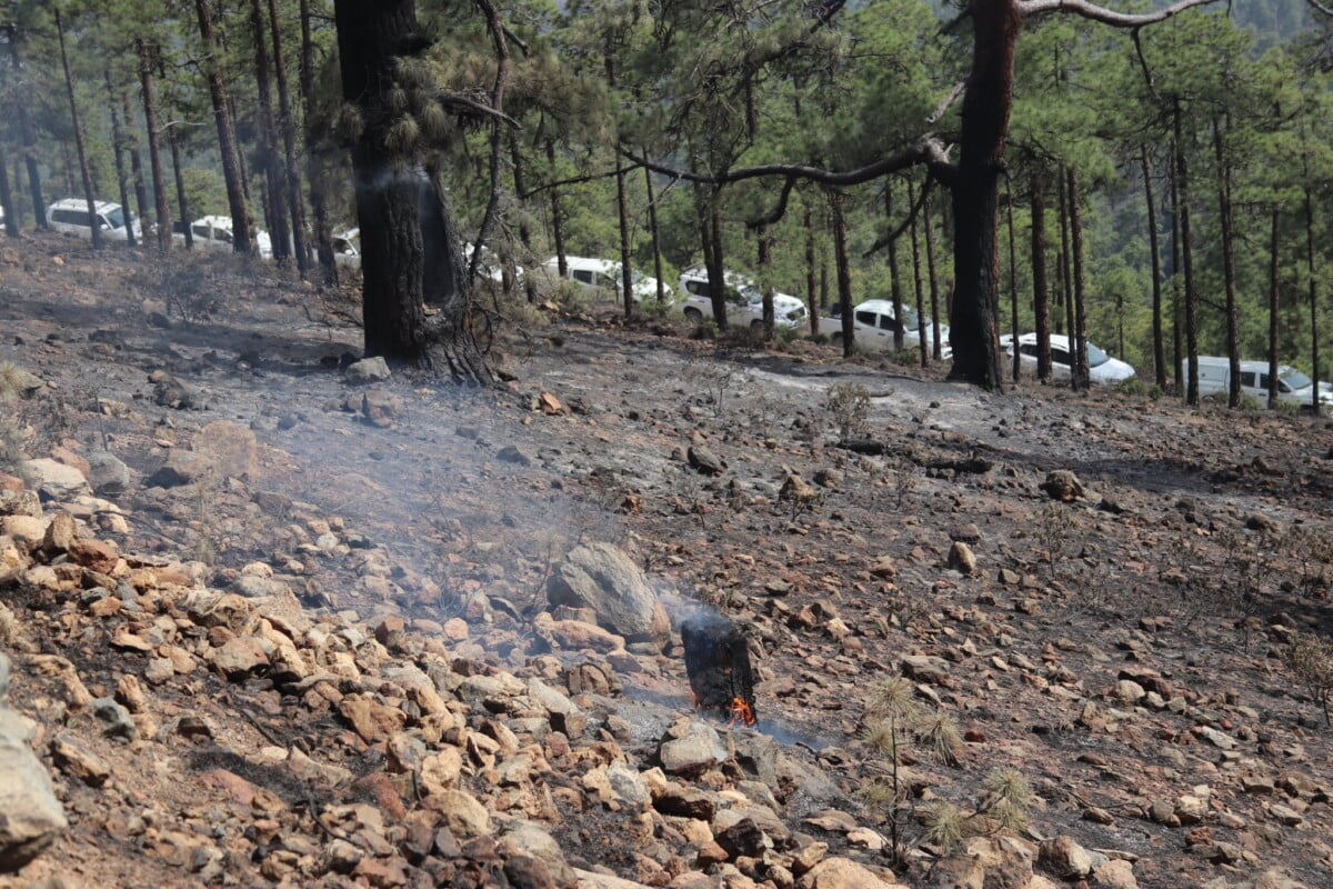 Tenerife forest fire stabilised though not yet declared under control
