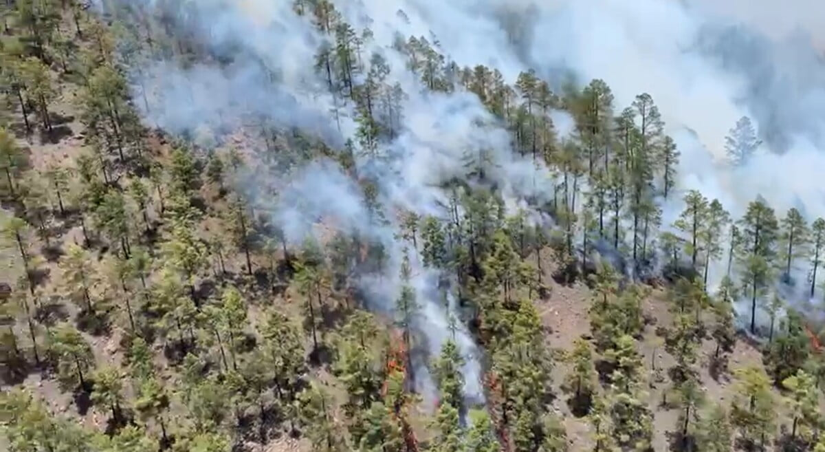 Four helicopters, a seaplane, fire fighters and the army try to bring Tenerife fire under control
