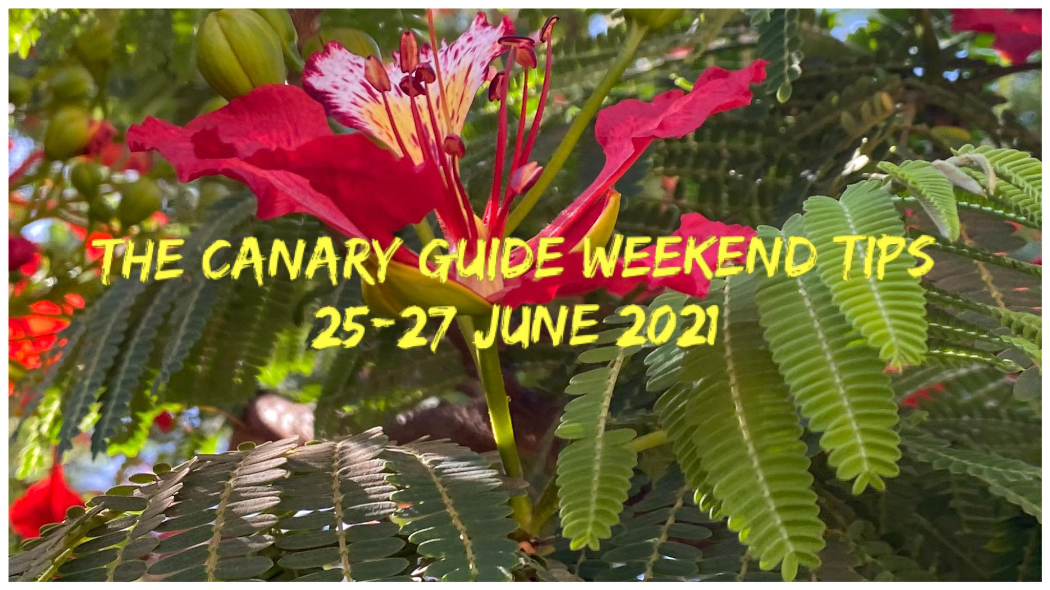 The Canary Guide Weekend Tips 25-27 June 2021