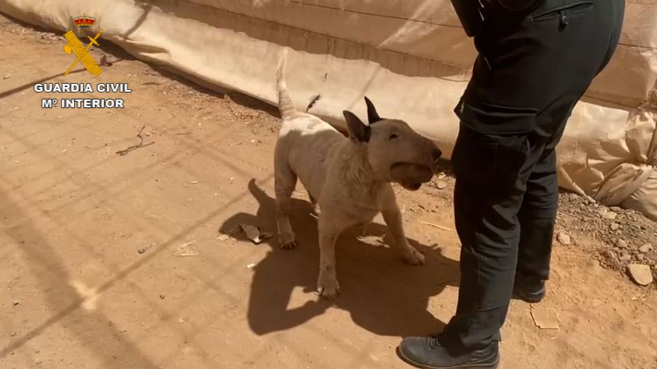 Two separate arrests for alleged animal abuses and abandonment in Castillo del Romeral and in Agüimes